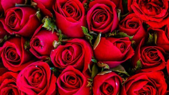 Manfaat air mawar untuk wajah